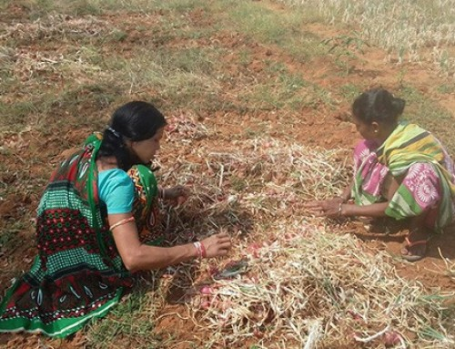 Improved Livelihoods through Crop Diversification into Vegetables in Jharkhand and Odisha