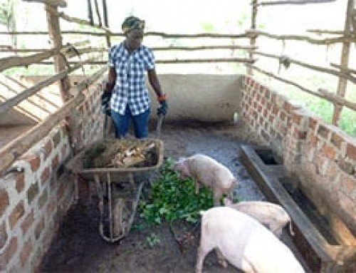 Governance structures in smallholder pig value chains in Uganda: Constraints and opportunities for upgrading