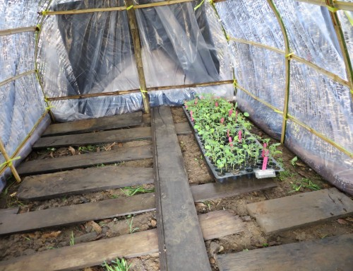Does protected cultivation have a place in sub-Saharan Africa?