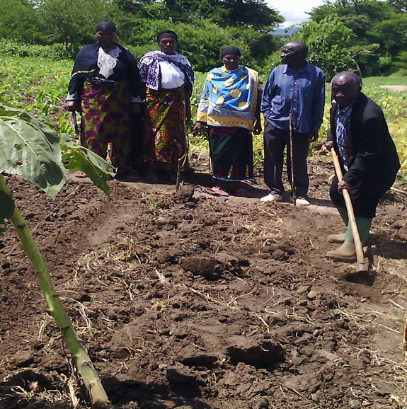 Mr. Puputo (with the hand hoe) teaches other farmers how to prepare a plot.