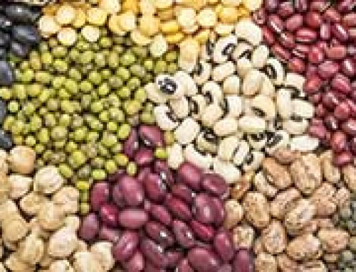 Temperature sensitivity of food legumes: a physiological insight