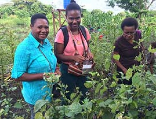 Promoting traditional vegetables in Papua New Guinea