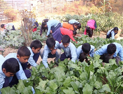 Impact of school gardens in Nepal: a cluster randomised controlled trial