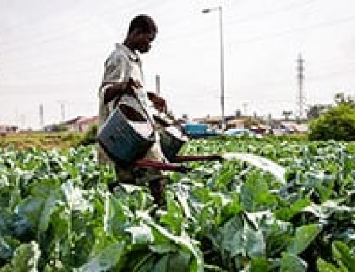 Assessing the sustainability of vegetable production practices in northern Ghana